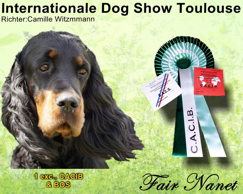 gordon-setter-zucht-foresters-of-darkmoor-touöouse