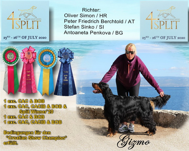 gordon-setter-zucht-foresters-of-darkmoor-split-winner