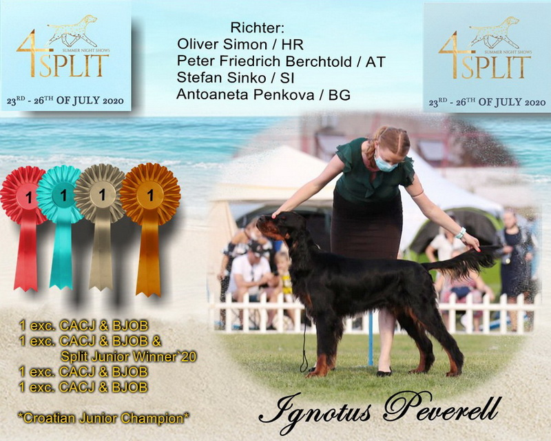 gordon-setter-zucht-foresters-of-darkmoor-split-summer-night-show