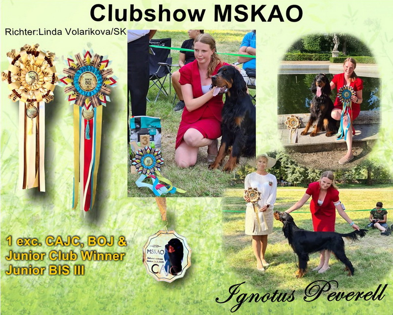 gordon-setter-zucht-foresters-of-darkmoor--club-jugend-sieger