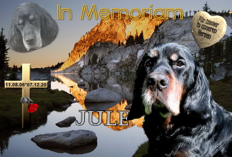 gordon-setter-zucht-foresters-of-darkmoor-memoriam