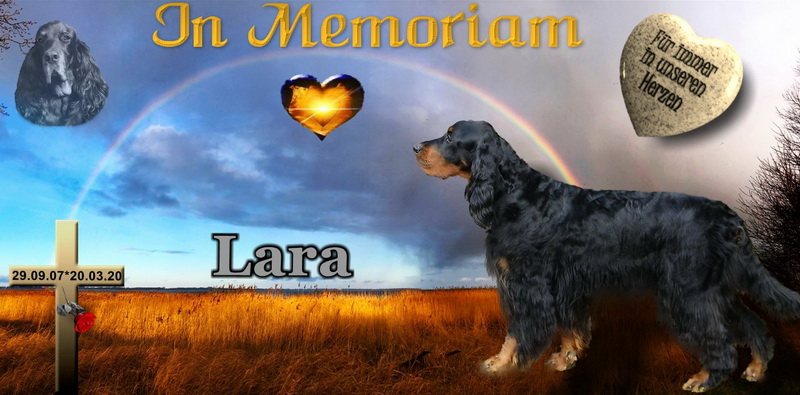 gordon-setter-zucht-foresters--of-darkmoor-memoriam