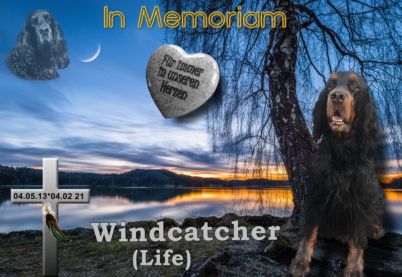 gordon-setter-zucht-foresters-of-darkmoor-in-memoriam