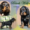 black william 26 maerz 16